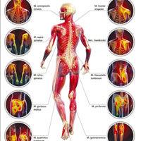 Боль в мышцах (Миалгия). Причины. Диагностика. Лечение