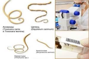 Анализ кала для выявления простейших паразитов. Как его правильно сдать? Что он выявляет?