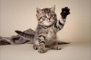 Препараты от глистов котёнку. Когда необходимо давать и что именно?