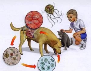 Глисты у детей: симптомы, признаки. Рекомендации и мнения Комаровского