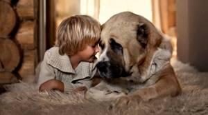 Глисты у собаки. Может ли заразиться человек?