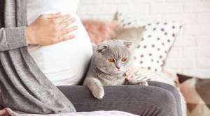 Проявление и опасность токсоплазмоза при беременности