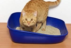 Глисты у кошек: симптоматика, причины и методы лечения