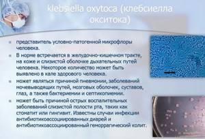 Клебсиелла у взрослого человека. Причины, симптомы и лечение