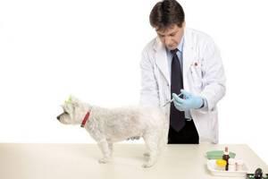 Применение препарата Ивермектин для человека и собак