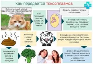 Токсоплазмоз у взрослых: симптомы, причины, лечение