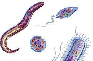 Эффективные народные средства против паразитов