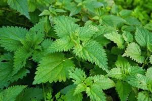 Какие лечебные травы помогут при глистах взрослому и ребёнку?