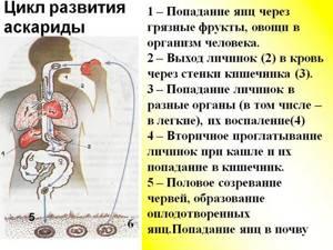 Что думает Елена Малышева о паразитах в теле человека?