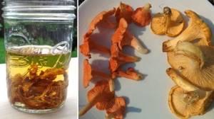 Настойка против паразитов из лисичек на водке. Рецепт. Как приготовить?