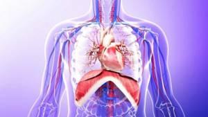 Эхинококкоз у человека. Способы заражения, симптоматика и лечение