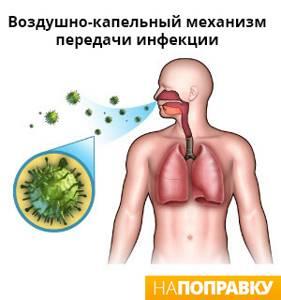 Аллергия и бронхит - советы врачей на каждый день
