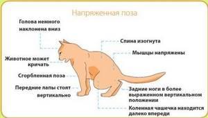 Болезни кошек от птиц - советы врачей на каждый день