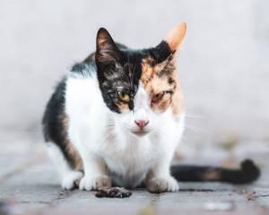 Рвота после общения с котенком - советы врачей на каждый день
