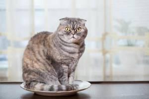 Кошка сошла с ума по улице - советы врачей на каждый день