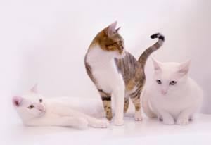 Возможность заражения бешенств ом от домашней кошки в черте города - советы врачей на каждый день
