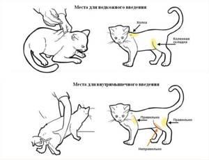 Сахар в крови у кошки 16 лет - советы врачей на каждый день