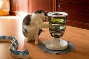 Кот не ест и не пьет - советы врачей на каждый день