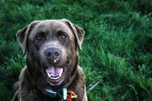 Опухли уши и морда у щенка - советы врачей на каждый день