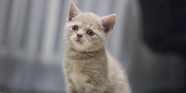 Мне не разрешают завести котёнка что делать? - советы врачей на каждый день