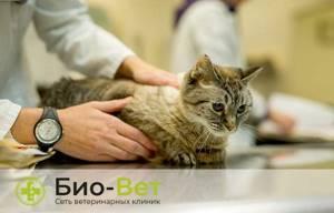 Котенок потягивает спину и задние лапки - советы врачей на каждый день