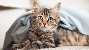 Что делать если у кошки сильное кровотечение - советы врачей на каждый день