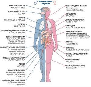 Повышены лимфоциты и лейкоциты, помогите разобраться с анализами - советы врачей на каждый день