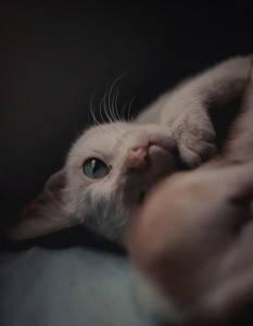 Прививки для домашней кошки - советы врачей на каждый день