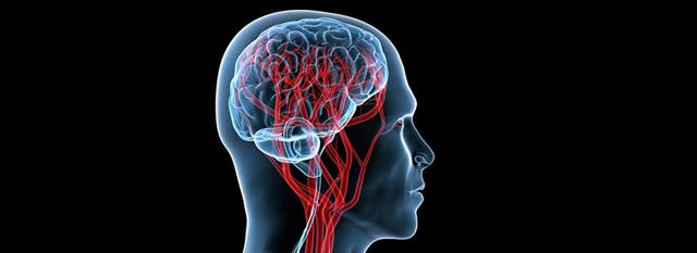 Результаты УЗИ головного мозга - советы врачей на каждый день