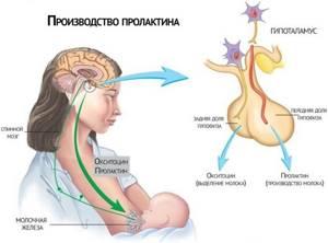 Повышен мономерный пролактин у женщин, причины? - советы врачей на каждый день