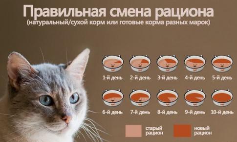 Кот ничего не ест и не пьёт! - советы врачей на каждый день