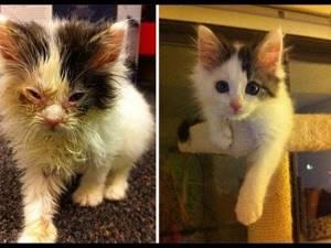 Гноятся глазки у котенка - советы врачей на каждый день
