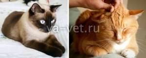 Опухоль у кошечки - советы врачей на каждый день