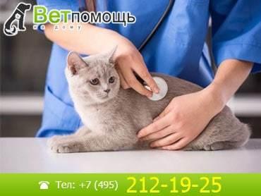 Кот отказывается от еды - советы врачей на каждый день
