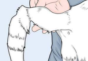 Что делать, если у кошки у лысеет хвост у основания - советы врачей на каждый день