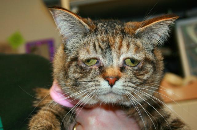 Котенок не ест и лежит - советы врачей на каждый день