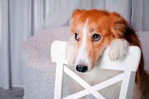 Собака не ест не пьёт 2 дня - советы врачей на каждый день
