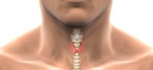 Киста перешейка щитовидной железы - советы врачей на каждый день