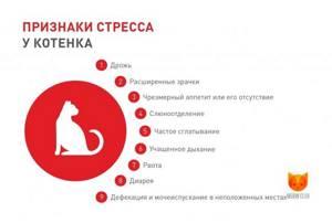 Постоянно беспокойный котёнок - советы врачей на каждый день