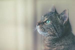 У кота пропал аппетит - советы врачей на каждый день