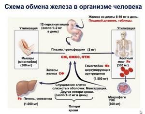 Дефицит железа при нормальном гемоглобине - советы врачей на каждый день