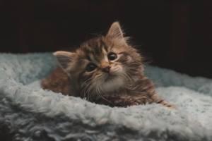 Кал с кровью у кошки - советы врачей на каждый день