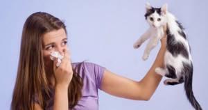 Аллергия на кошку - советы врачей на каждый день
