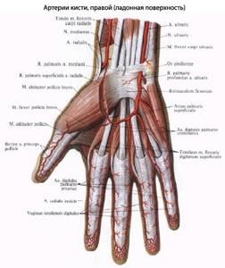 Онемение пальцев рук - советы врачей на каждый день
