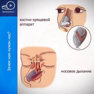 Заложен нос мучаюсь три года - советы врачей на каждый день