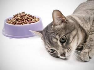 Кот не ест, вялый - советы врачей на каждый день