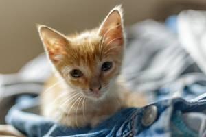 Котенок, выделения из глаз - советы врачей на каждый день