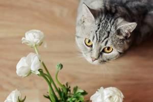 Кот покусал и сьел растение пуансетию,что делать? - советы врачей на каждый день