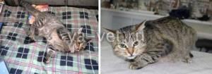 У кота приступы (очень похожи на эпилепсию) - советы врачей на каждый день