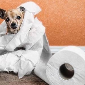 Собака болеет неделю - советы врачей на каждый день